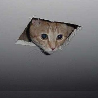 Ceiling-Cat-Picture