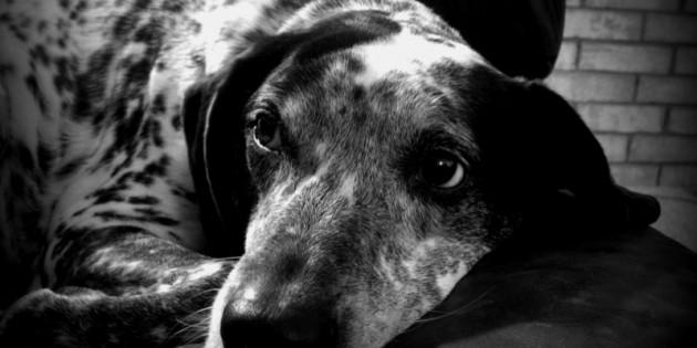 Happy Adopt-a-versary, Rosie! 2012 Edition
