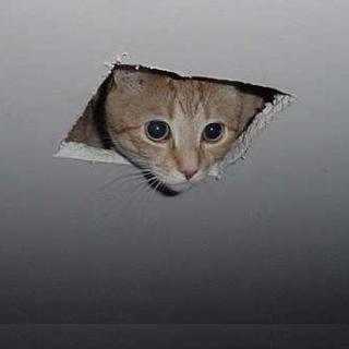 Ceiling-Cat-Picture